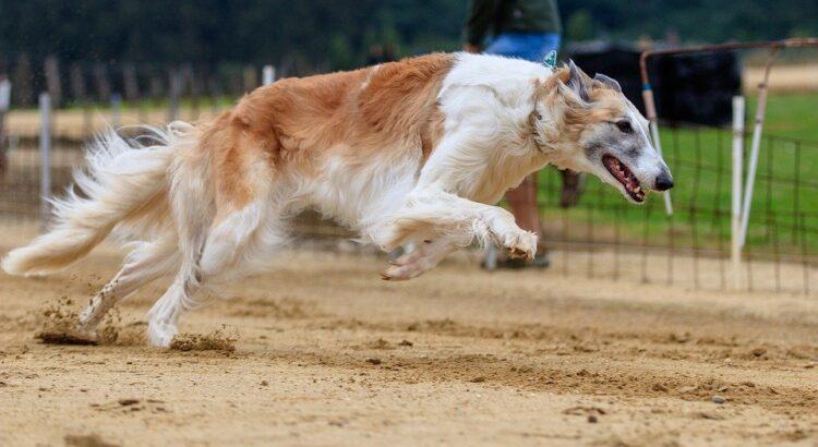 Casinoper Köpek Yarışları Tutturma Taktikleri